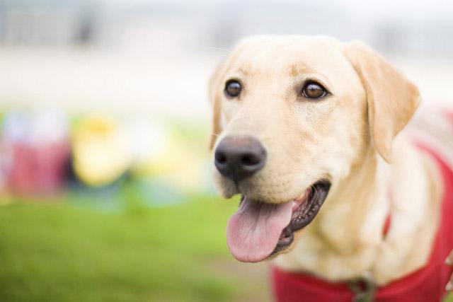 介助犬団体