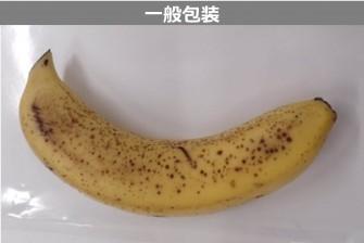 バナナ試験最終日の画像2