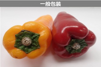 ピーマン(赤・黄)試験最終日の画像2
