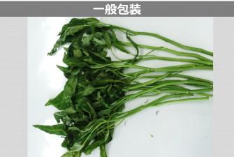 空芯菜試験最終日の画像2