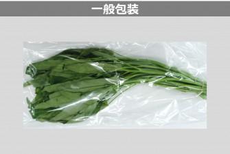 空芯菜試験初日の画像2