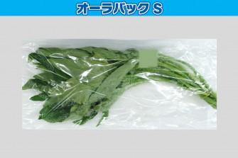 空芯菜試験初日の画像1