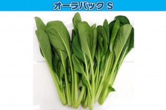小松菜試験最終日の画像1