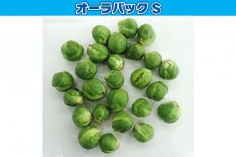 芽キャベツ試験最終日の画像1
