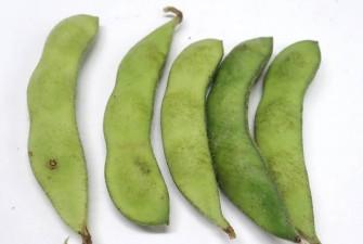 枝豆試験最終日の画像3