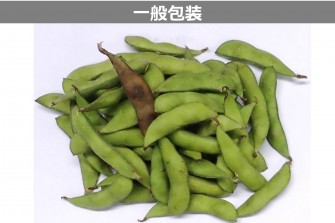 枝豆試験最終日の画像2