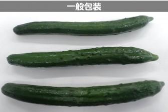 きゅうり試験初日の画像2