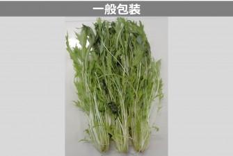 水菜試験最終日の画像2