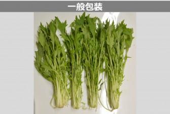 水菜試験初日の画像2