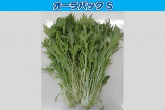 水菜試験最終日の画像1