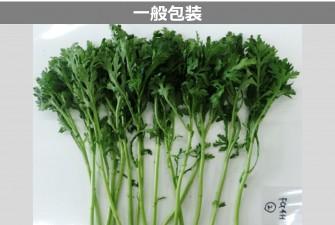 春菊試験初日の画像2