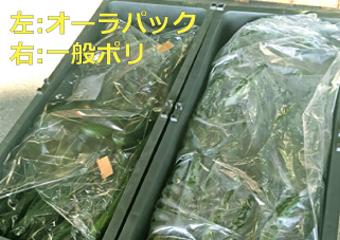 「オーラパック」を導入されて(株式会社飯田青果様)_1