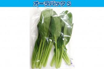 小松菜試験初日の画像1