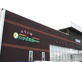 「オーラパック別注品」「環境対応インク」を導入されて(農業生産法人わかば農園株式会社 様)_4