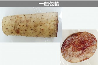 長芋試験最終日の画像2