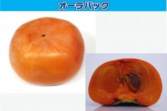 柿試験最終日の画像1
