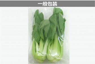 チンゲン菜試験初日の画像2