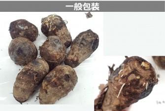 里芋試験最終日の画像2