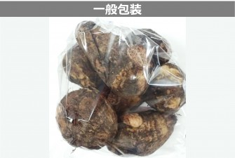 里芋試験初日の画像2