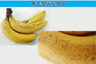 バナナ試験最終日の画像1