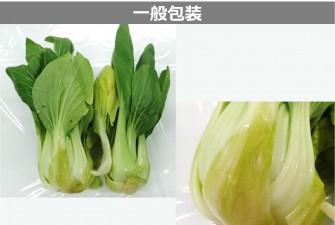 チンゲン菜試験最終日の画像2