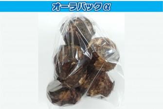 里芋試験初日の画像1