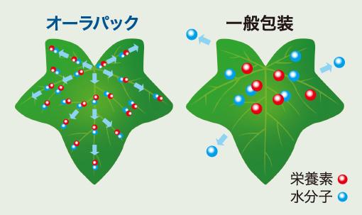 水分子の活性化機能向上による効果