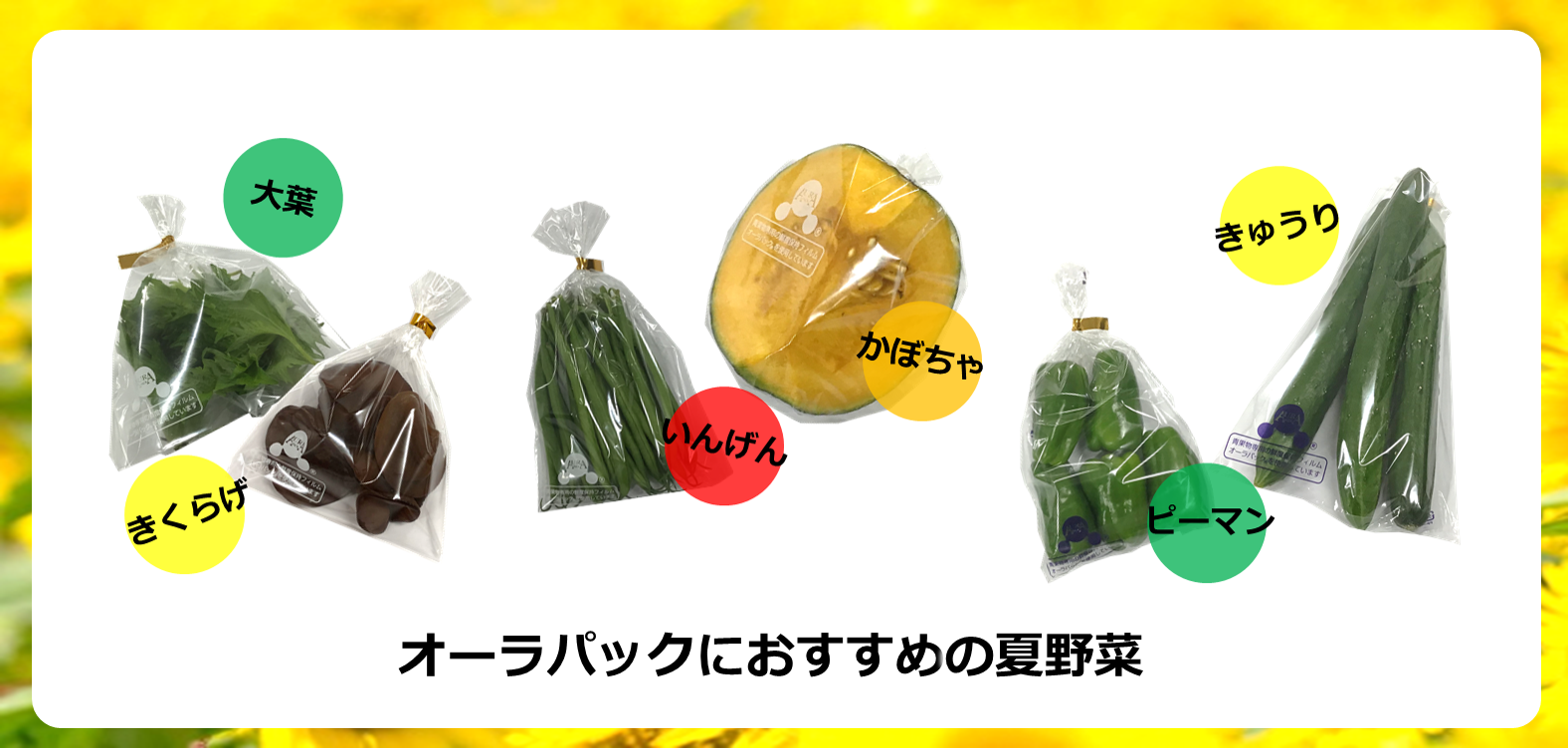 オーラパックにおすすめの夏野菜