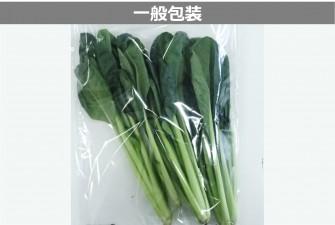 小松菜試験初日の画像2