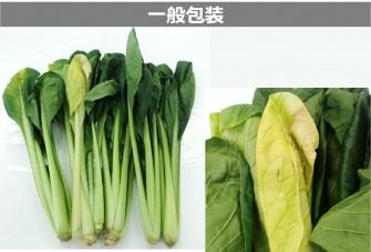 小松菜試験最終日の画像2
