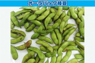 枝豆(茶豆)試験最終日の画像1